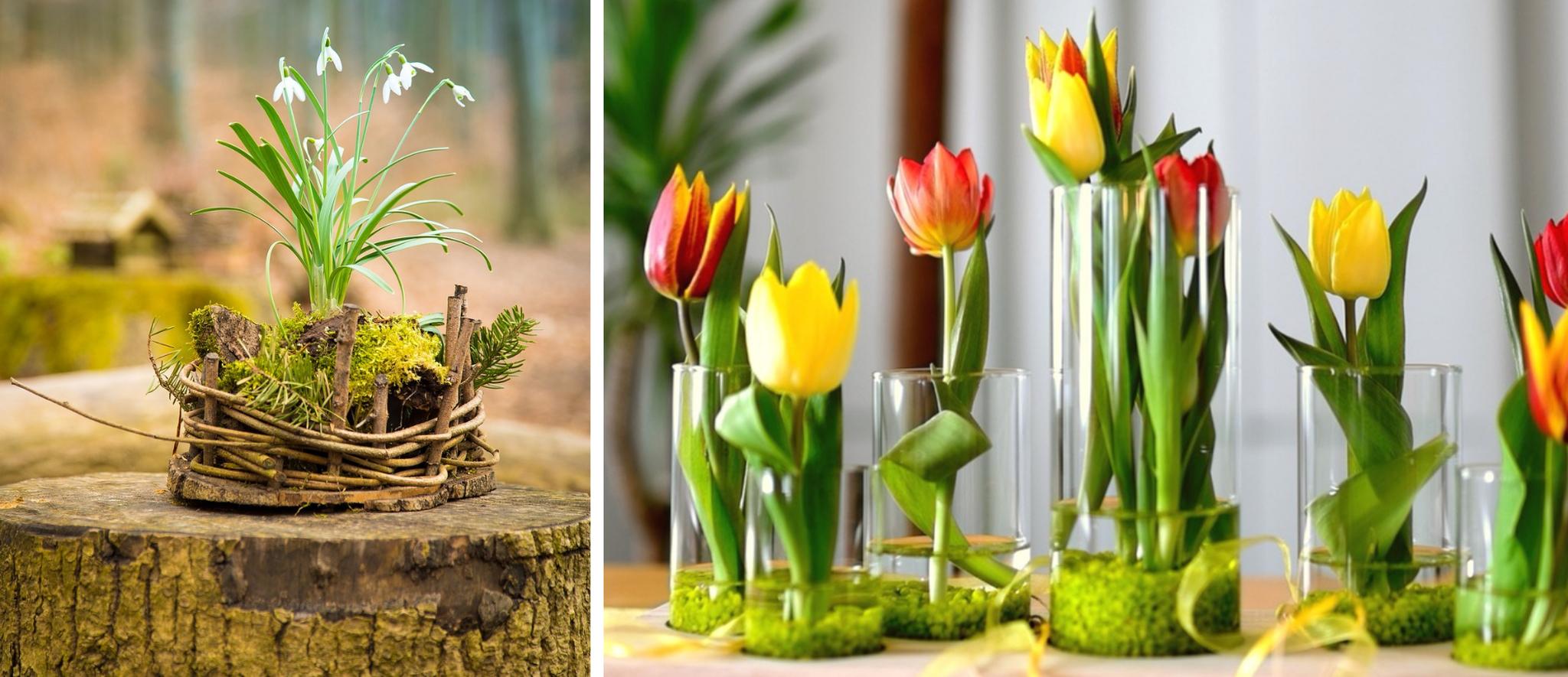 mech w szkle tulipany