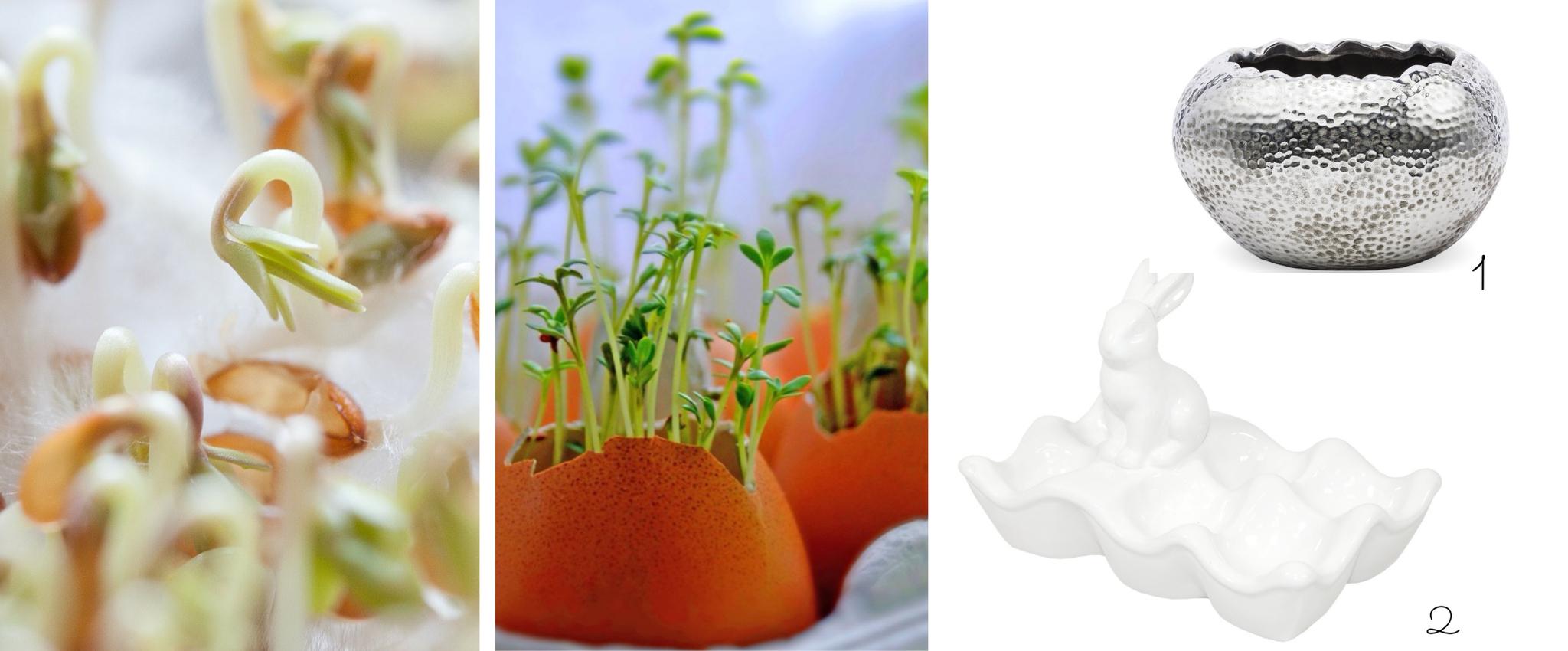 rzeżucha w skorupkach jajek podstawka pod jajka